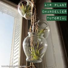 tutorial air plant chandelier
