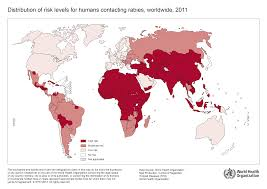 anti rabies strategies vaccinating dogs to save human lives  risk of human rabies 2011
