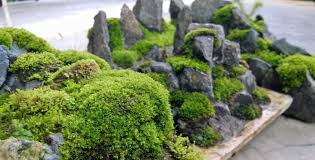 Download Where To Find Moss | Solidaria Garden