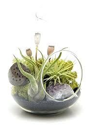 air plant terrarium kit diy hanging bliss gardens midnight forest 6 oval glass with or without