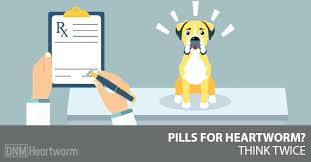 natural heartworm treatment. Heartworm Treatment At Home Dogs Natural Remedies Remedy For .