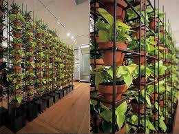 Small Picture GREEN YOUR WALLS with Schiavello Vertical Gardens Green walls