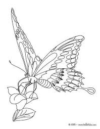 Small Picture 102 best Birds and Butterflies Coloring Pages images on Pinterest