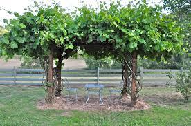 Image of: Stylish Grape Arbor Ideas