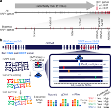 Genome Editing Accurate Classification Of Brca1 Variants With Saturation Genome