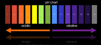 What Is Ph? - Ecobeings.com