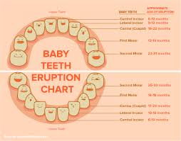 Teeth Growth Chart Childrens Tooth Growth Chart Inspirelle