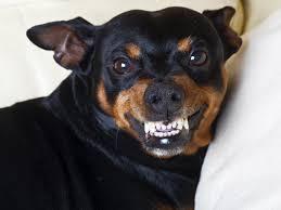 Diese 6 Sprüche Können Hundefreunde Nicht Ausstehen