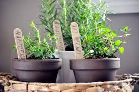 Kitchen Garden In Pots Garden Landscaping Modern Black Indoor Kitchen Gardening With