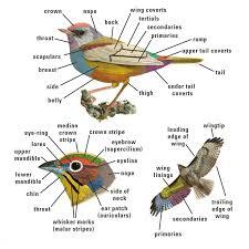 National Geographic Backyard Guide To The Birds Of North America Backyard Bird Watch