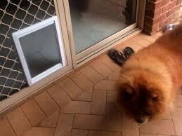 large dog door for screen doors