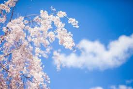 思いっきりオシャレを楽しみたい!春ゴルフのファッションポイント