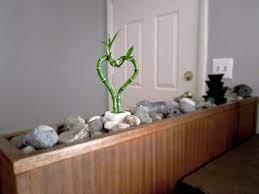 a lucky indoor rock garden how to