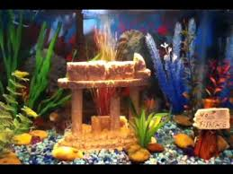 MY FIRST 10 GALLON COLORFUL FRESHWATER TIGER BARB AND BLACK TETRA FISH TANK