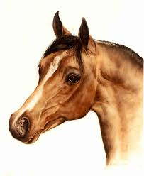 head study portrait of ortalion bay arabian stallion glass painting on milk white