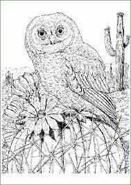 5 Grote Vogel Kleurplaten 33314 Kayra Examples