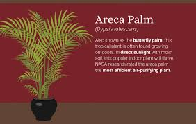 Tropical office plants Popular 5bestplantsforairquality Moore Park Plantscapes Office Plants Keep Bad Air Out Of Your Lungs While You Breathe All