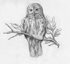 Coloring 91sg Tz3scl Sl1500 Owl Drawing Images Female Barn
