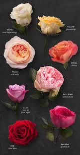 amazing rose tattoos meaning and