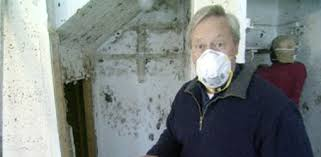 how to prevent and remove mold in your