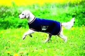decoration best area rugs for dogs dog chew proof waterproof pet carpet pad fleece rug