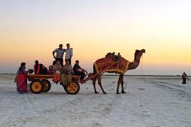 Image result for CAMEL CART SAFARI HD IMAGES