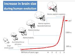 Evolution Of The Human Brain