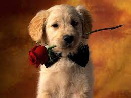 Cute Puppies Wallpapers For Mobile ...