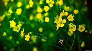 Green and Yellow Flowers Wallpapers ...