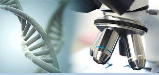 biology assignment help service ensures high qualityassignment   id biology