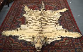 lot 930 a fine victorian full length taxidermy tiger skin rug of naturalistic form