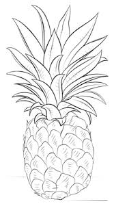 Small Picture Pineapple coloring page Free Printable Coloring Pages