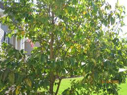 Comprehensive Resources For Fruit Trees   NC State ExtensionFruit Trees That Grow In Nc