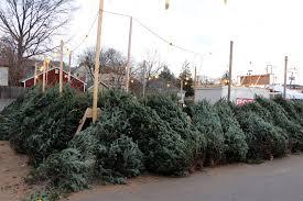 Where to Buy a Christmas Tree in Arlington | ARLnow.com