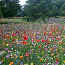 2 packets free 100 wild flower seed mix annual meadow plants attracts bees erfly 10g wildflower seeds mix 3 co uk garden outdoors