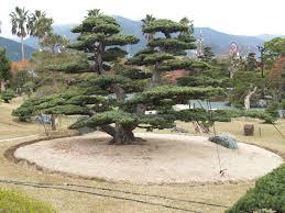 Japanese Garden Design Toronto Takasago An Bonsai Garden Japan Japan Garden Bonsai
