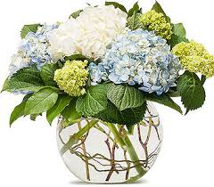 Small Picture Mighty Hydrangea in Eugene OR The Shamrock Flowers Gifts