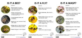 Bees Of Missouri Missouris Natural Heritage
