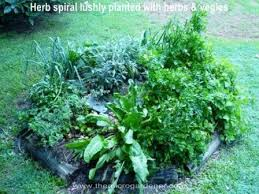 Small Picture How to Plant out a Herb Garden The Micro Gardener