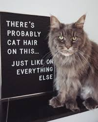 Every Cat Owner Knows This Letterboard Letter Board Animal
