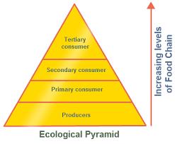 Ecosystem Pyramid Chart Ecosystem Pyramid Chart Www Bedowntowndaytona Com