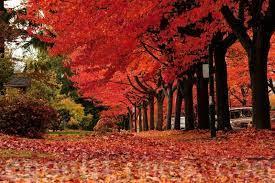 诗歌:加拿大秋色| 大纪元