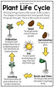 Plant Life Cycle Lessons Tes Teach