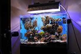 Restyling acquario con aggiunta di sabbia viva caribsea danireef