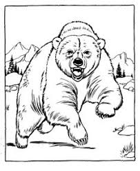 Small Picture Zoo Coloring Pages For Preschoolers Walrus coloring sheets to