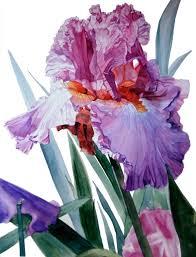 saatchi art artist greta corens painting botanic watercolor of iris luciano pavarotti