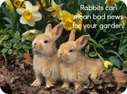 garden animals. Rabbit In Garden Animals T