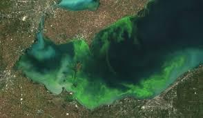 Blue Green Algae Found In Wasi Lake Northbaynipissing Com