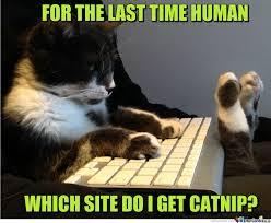 Catnip Not Even Once by clairvoyant - Meme Center via Relatably.com