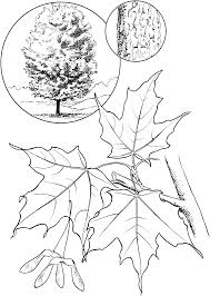 Explore Coloring Pages To Print And
